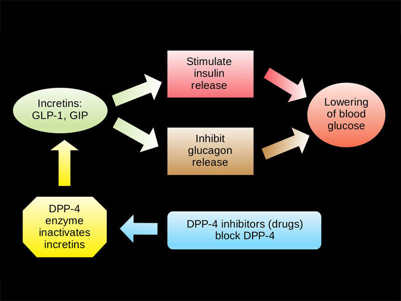 Qtern slows the inactivation of incretin metabolic hormones in type 2 diabetics. Image courtesy of Clinical Cases, Ilmari Karonen.