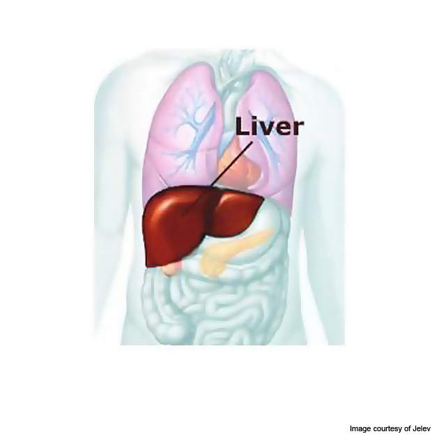 The Hepatitis B infection may cause liver inflammation or jaundice.