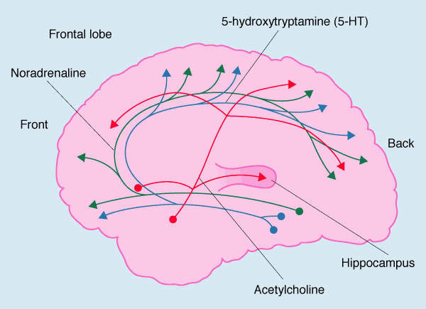 Loss of acetylcholine, an important neurotransmitter, is a key pathological feature of Alzheimer's disease (AD) and contributes to the cognitive decline that characterises this disease.