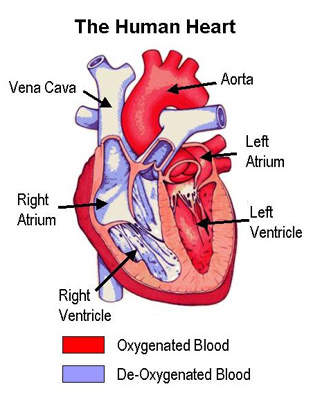 Venous thromboembolism is the third most common cardiovascular disease.