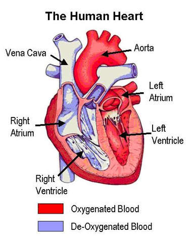 Venous thromboembolism is the third most common cardiovascular disease after heart attack and stroke.