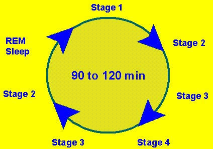 Diagram of the different stages of the sleep cycle.