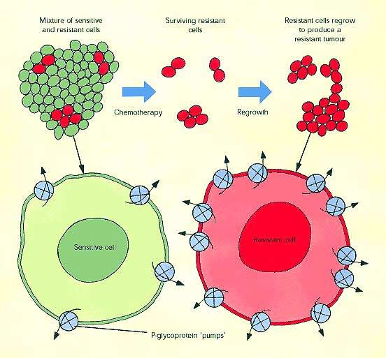 An illustration of how tumour cells develop resistance to chemotherapeutic agents reducing their clinical effectiveness. (Source: ABPI)
