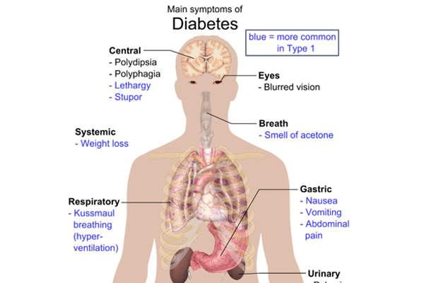 The symptoms of type 2 diabetes include frequent urination, constant appetite and excess thirst.