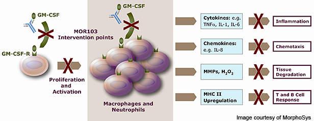 The MOR103 mechanism in action.