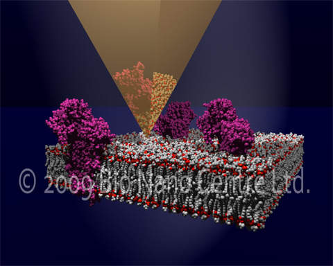 Image of membrane-bound proteins