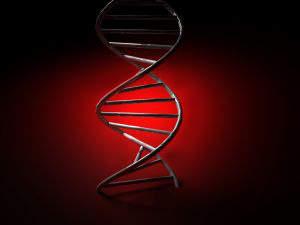 Oligonucleotide primers