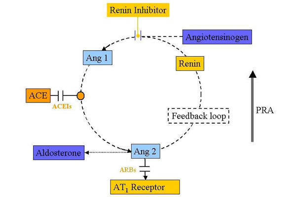The Renin Angiotensin system (RAS) is one of the key regulators of blood pressure, in which the enzyme renin plays a pivotal role.
