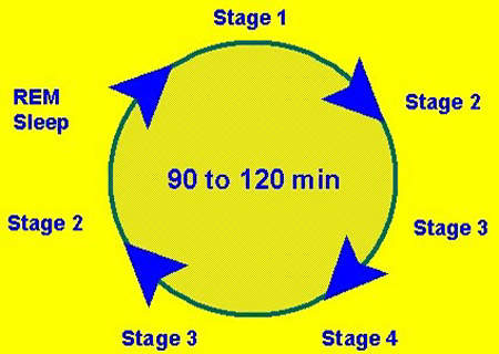 Diagram illustrating the different stages of the sleep cycle.