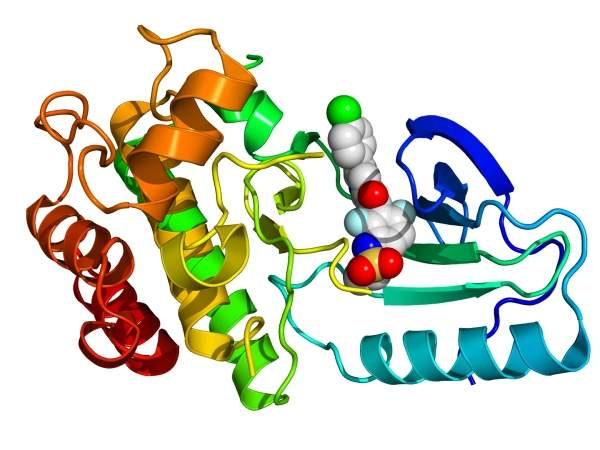 Crystallographic structure of B-Raf enzyme inhibitor. Image courtesy of BogHog2.