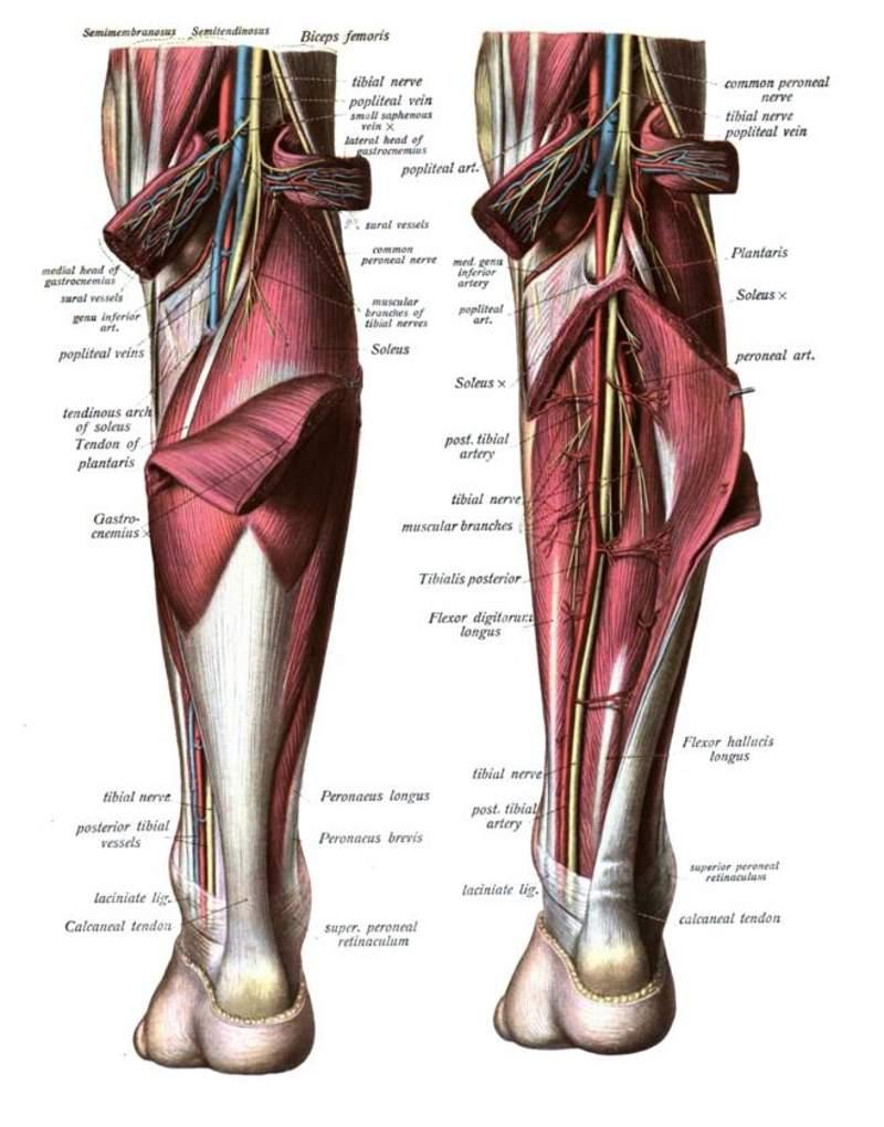 Dysport (abobotulinumtoxinA) for the Treatment of Lower Limb ...