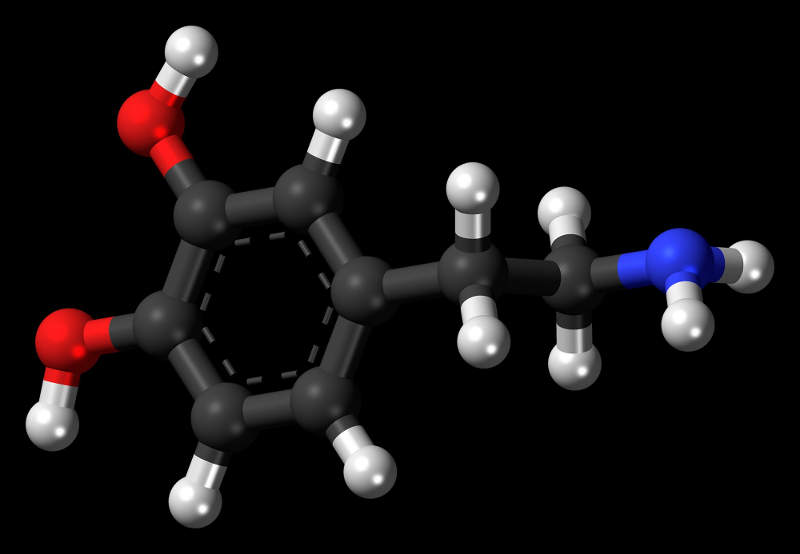 Austedo™ regulates the levels of dopamine, a neurotransmitter, in the brain. Image: courtesy of Jynto / Wiki Commons.