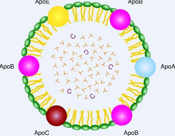 Lipoprotein Lipase Deficiency is caused by chylomicron particles which transport fat through the blood.