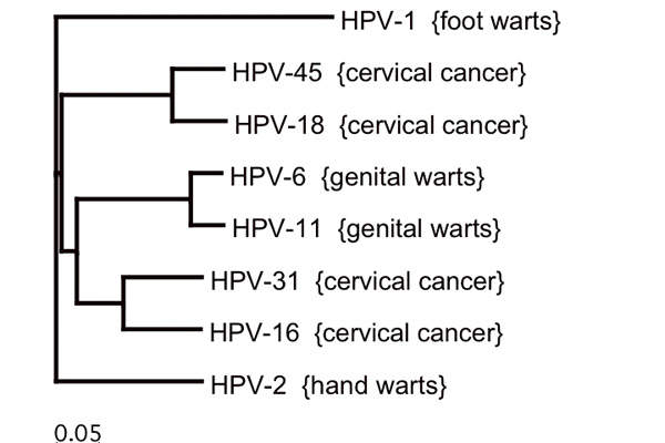 Human papillomavirus (HPV) is a DNA virus that leads to a number of cancers and warts. Image: courtesy of Remember the dot (Wikipedia / Wikimedia Commons)