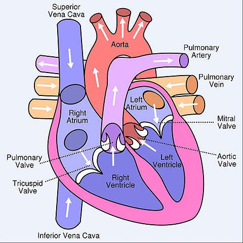 Clots can be caused by an abnormal heartbeat.