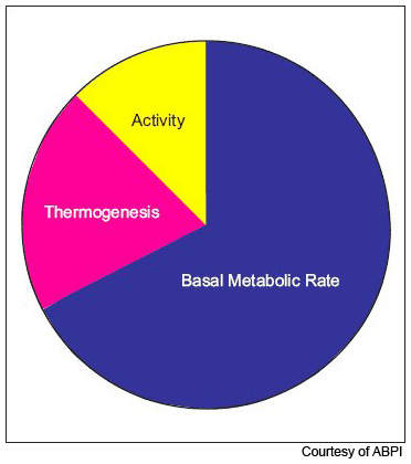 Maintaining the Basal Metabolic Rate (metabolism) accounts for 60–75% of daily energy expenditure in most people, while physical activity accounts for only 10–15%.