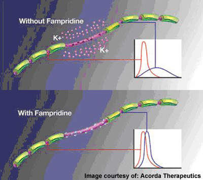 Famipridine-SR is designed to block specialised potassium channels on axons and restore nerve impulses even in a demyelinated state.