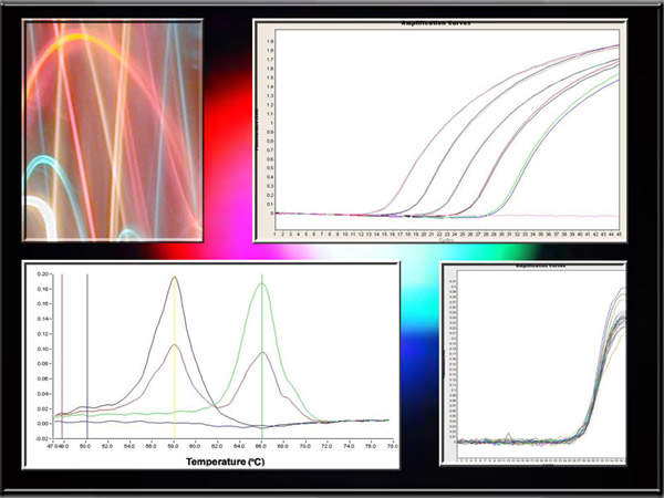 Multicolor real-time PCR