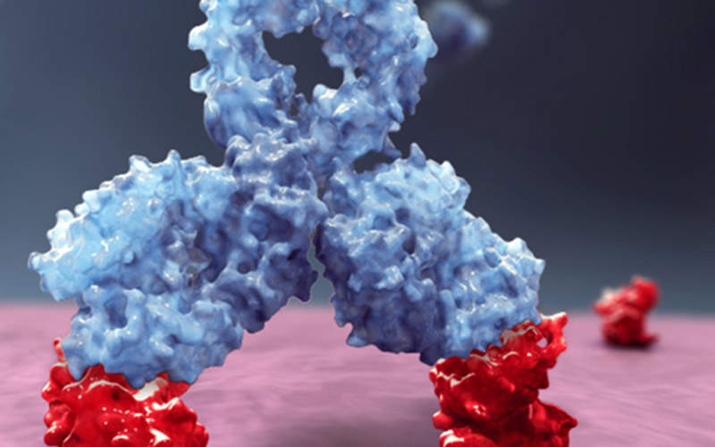 The drug contains the first human anti-CD38 monoclonal antibody (mAb). Image: courtesy of Janssen Biotech.