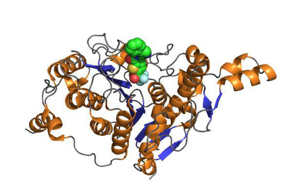 Belinostat contains a pan-Histone deacetylase (HDAC) inhibitor. Image courtesy of A2-33.