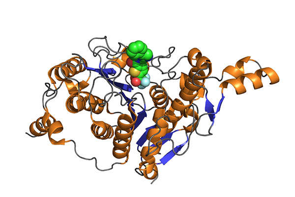 Farydak contains a histone deacetylase (HDAC) inhibitor. Image: courtesy of A2-33.
