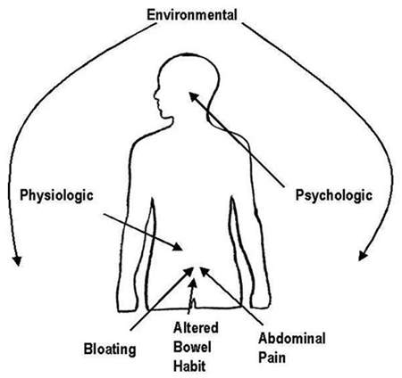 Relationship between the environmental, physiological and psychological factors in the development of IBS.