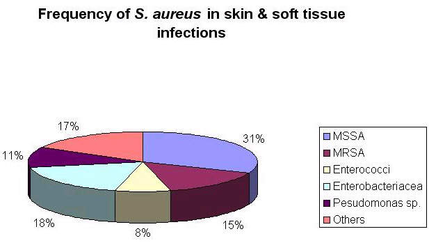 <em>Staphylococcus aureus</em> is a major cause of skin and soft tissue infections.