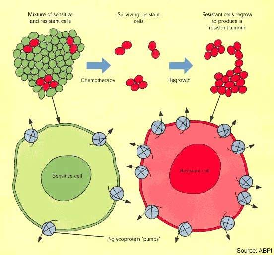 Tumour cells develop resistance to chemotherapeutic agents