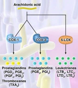 Licofelone inhibits both COX -1 and COX-2 enzymes as well as 5-lipoxygenase (5-LOX), which is associated with the production of pro-inflammatory and gastrotoxic leukotrienes.