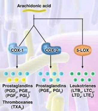 Pro-inflammatory and gastrotoxic leukotrienes