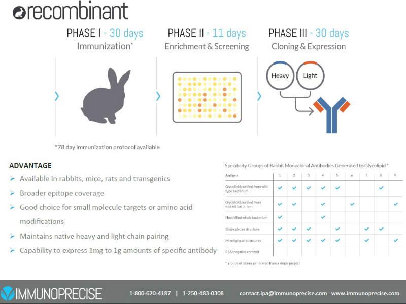 Recombinant Antibody Development
