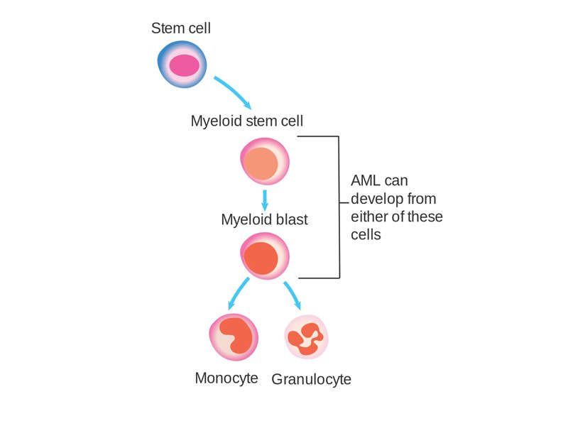 Quizartinib is indicated for the treatment of acute myeloid leukaemia, an aggressive cancer of the blood and bone marrow. Image courtesy of Cancer Research UK.
