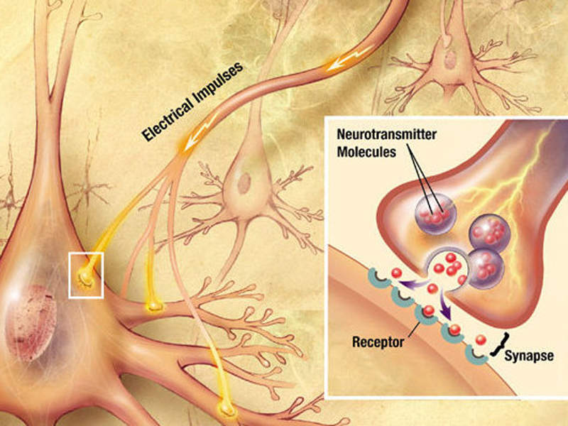 Epilepsy patients usually experience electrical disturbances in the brain, which lead to seizures.