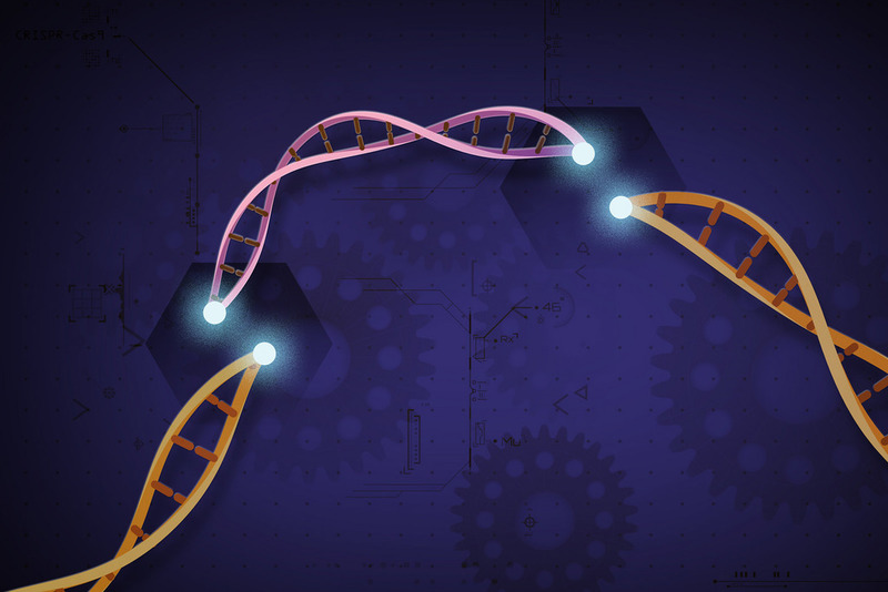 CRISPR and Vertex treat first patient in gene-editing therapy trial