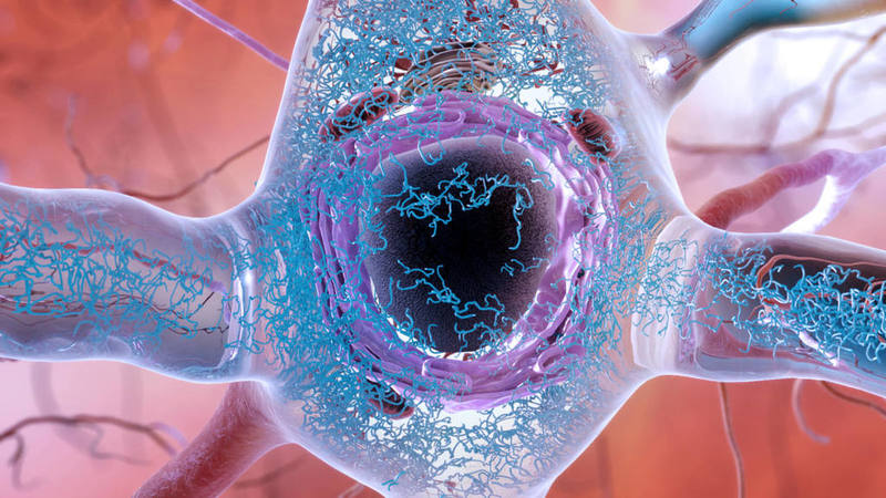 Neurotrope doses last patient in Alzheimer's trial