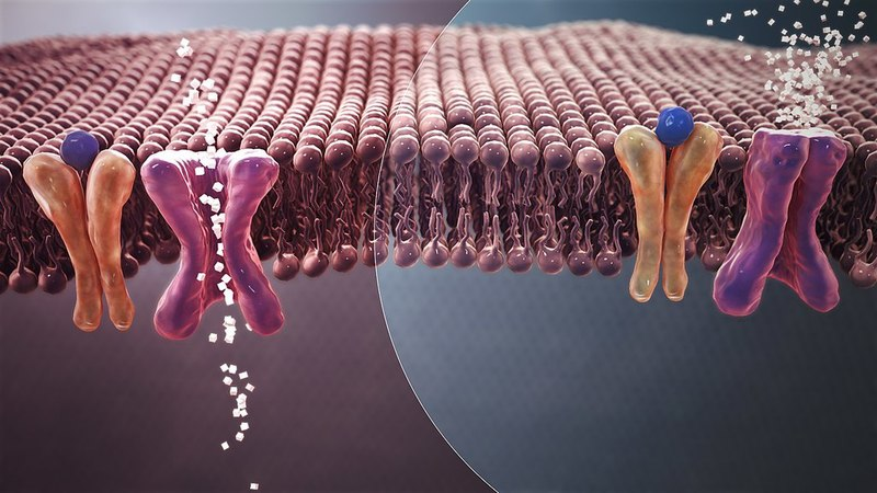 Poxel reports positive type 2 diabetes data for Imeglimin