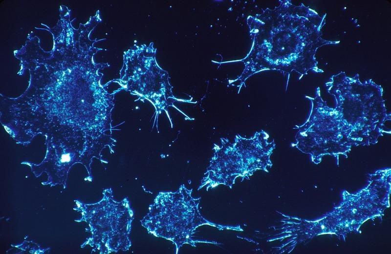 Roche reports positive Phase I/II data for entrectinib