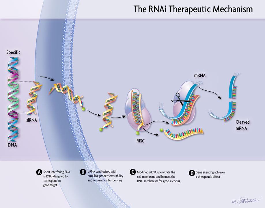 RNAi Therapeutic Process