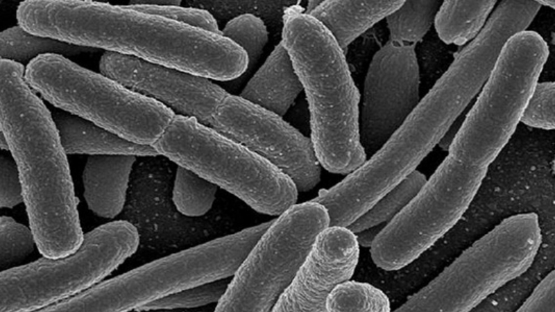 Zerbaxa Antibiotic by Merck