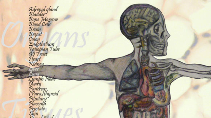 Human biological materials